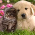 $390 PET SUPPLIES – Monthly