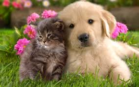$130 PET SUPPLIES – Monthly